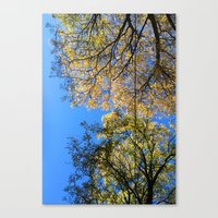 Underbranches Canvas Print