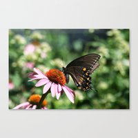 Canvas Print featuring Eastern Tiger Swallowtail - Black Morph by Ornithology