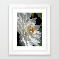 Lotus White Framed Art Print