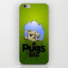 a Pug's life iPhone & iPod Skin