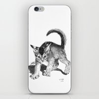 Furious Kitten SKnb88 iPhone & iPod Skin