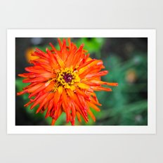 Macro Red Flower Art Print