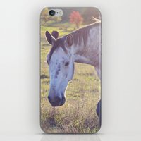 Star Horse iPhone & iPod Skin