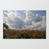 Harvest Landscape (Color Layers) Canvas Print