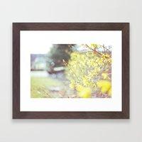Yellow Forsythia Framed Art Print
