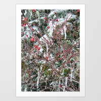 Iced Berries Art Print