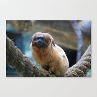 Monkey on Rope Canvas Print