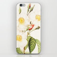 III. Vintage Flowers Botanical Print by Pierre-Joseph Redouté - Rosa Damascena Subalba iPhone & iPod Skin