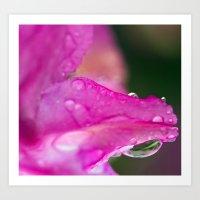 Flower Rain Art Print