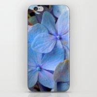 Hydrangea Happy iPhone & iPod Skin