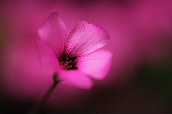 Fluorescent Pink Art Print