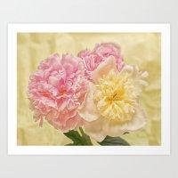 Divine Pink & White Peonies Art Print