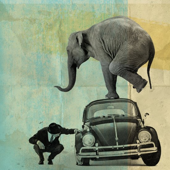 Looking for Tiny, Elephant on a VW beetle Canvas Print