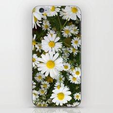 Daisys iPhone & iPod Skin