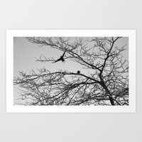 two crows Art Print