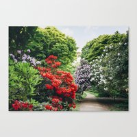 Path through Rhododendron trees. Norfolk, UK. Canvas Print