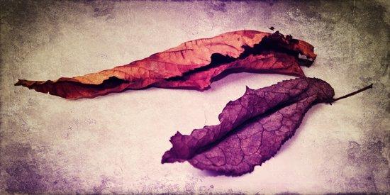 feuilles d'Automne meets purple autumn Canvas Print