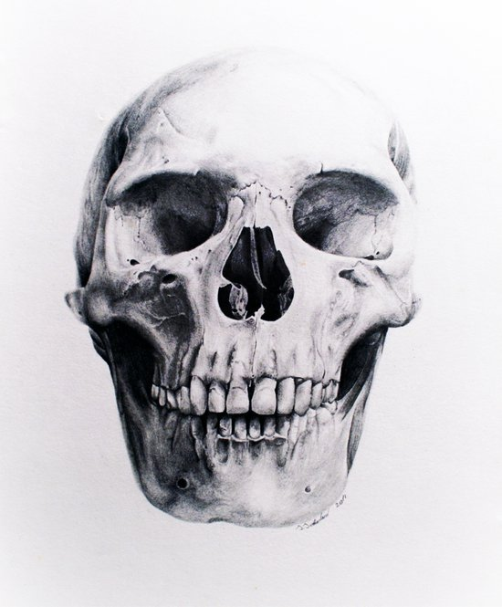Skull Drawing Art Print
