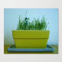 Duck In Wheat Grass Canvas Print
