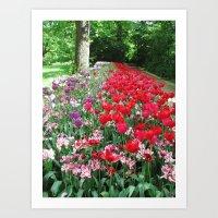 Tulips Path Art Print