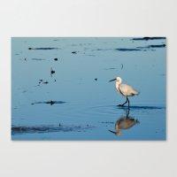 Egret Walk Canvas Print