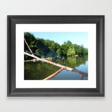 Blu dragonfly Framed Art Print