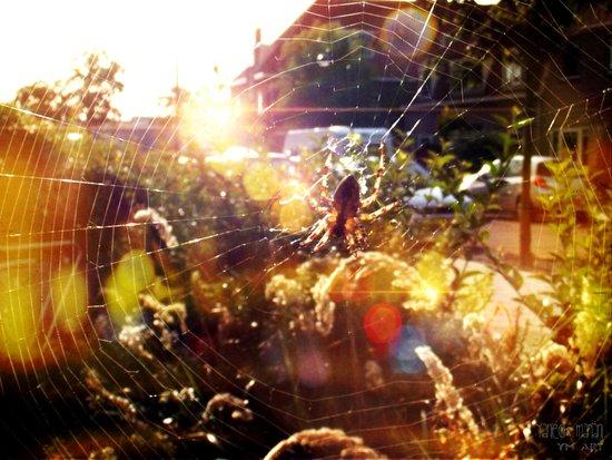 Spider Bokeh 2 Art Print
