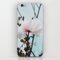 Matilija White Poppies iPhone & iPod Skin