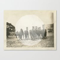 Band of Horses - White Canvas Print