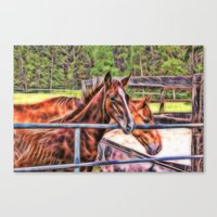 Horses And Gate Canvas Print