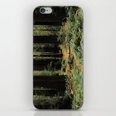 Deer in Redwood Forest iPhone & iPod Skin