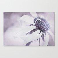 Echinacea purple Canvas Print