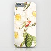 iPhone & iPod Case featuring III. Vintage Flowers Botanical Print by Pierre-Joseph Redouté - Rosa Damascena Subalba by Anne Dante