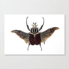 Beetle Canvas Print