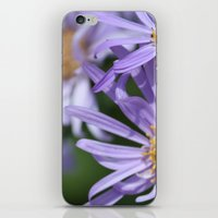Daises Everywhere iPhone & iPod Skin
