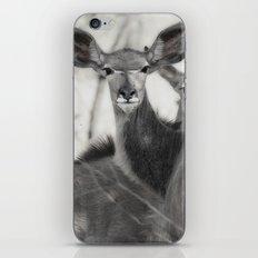Kudu iPhone & iPod Skin