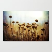 Where the Night Runs Into the Day Canvas Print