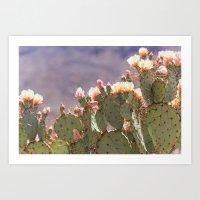 Prickly Pear Blooms I Art Print