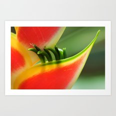 Exotic Flower - Heliconia 361 Art Print