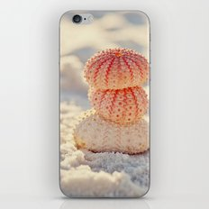 Sea Urchins iPhone & iPod Skin