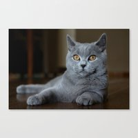 Diesel the cat 1 Canvas Print