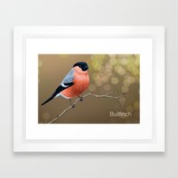 Bullfinch Framed Art Print