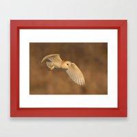 Barn Owl In Flight Framed Art Print