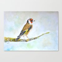 European goldfinch on tree branch Canvas Print