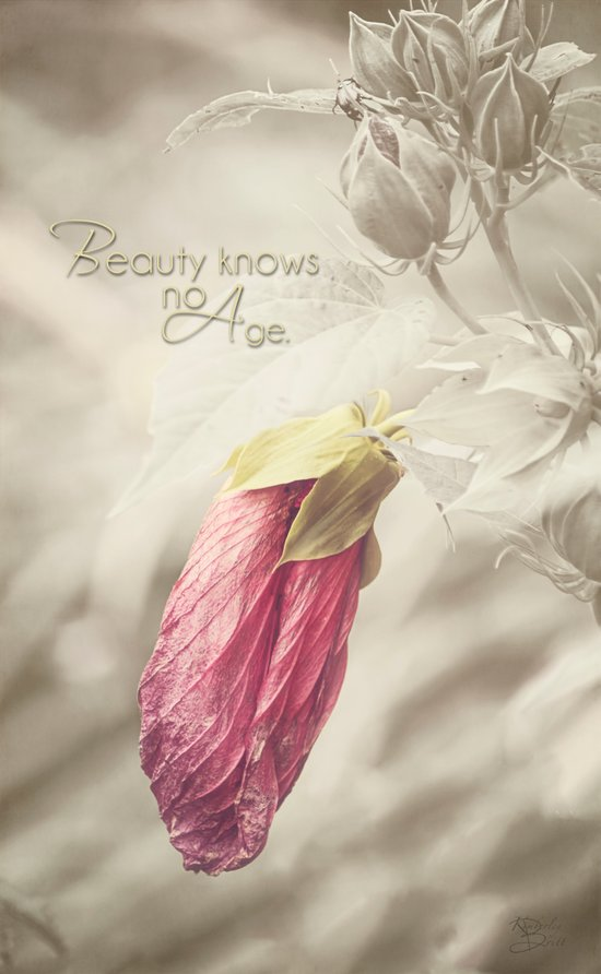 Beauty knows no Age - Text Canvas Print