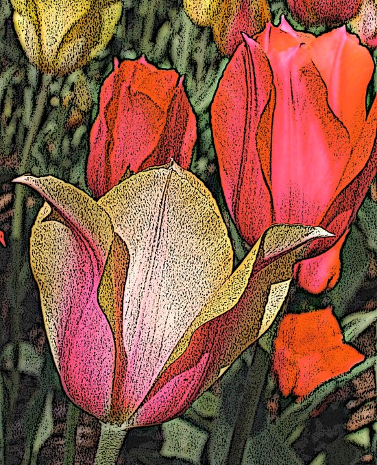 Graphic Tulips  Art Print