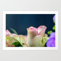 Softness of a rose Art Print