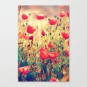 Morning Light - Poppy Field Canvas Print