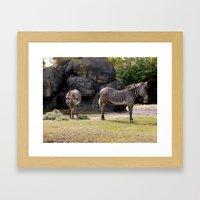Magestic Zebras Framed Art Print