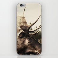 Tom Feiler Moose iPhone & iPod Skin